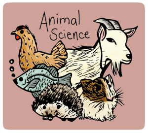Illustration of a chicken, hedgehog, fish, and goat together